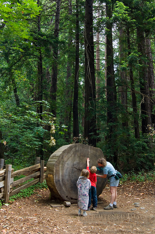 Family looking at cut redwood log section at Pfeiffer Big Sur State Park, Monterey County, California