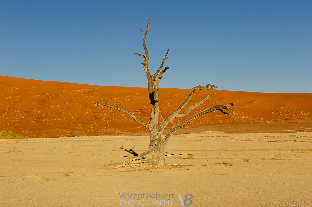 a classic view of Deadvlei in Namib-Naukluft Park, Namibia