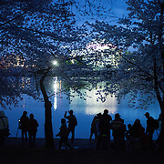 Photographers line up along the waterfront of the Tidal Basin before sunrise during the peak bloom of the famous cherry blossoms. The lights of the Jefferson Memorial are in the distance behind the trees.
