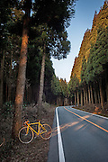 The forest lined mountain road out of Aso by vintage Italian racer.