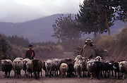 Shepherdess and helper return from grazing her sheep in the Andean foothills.