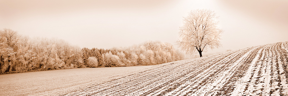 Isolated tree, field covered with thin snow, frozen forest, countryside near Trey in Switzerland
