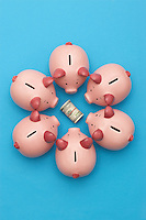 Piggy banks surrounding roll of dollar bills blue background view from above