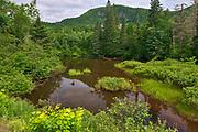 River in boreal forest, Parc National du Saguenay, Quebec, Canada