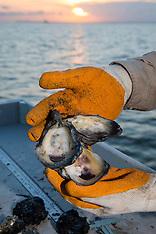 Oysters Industry