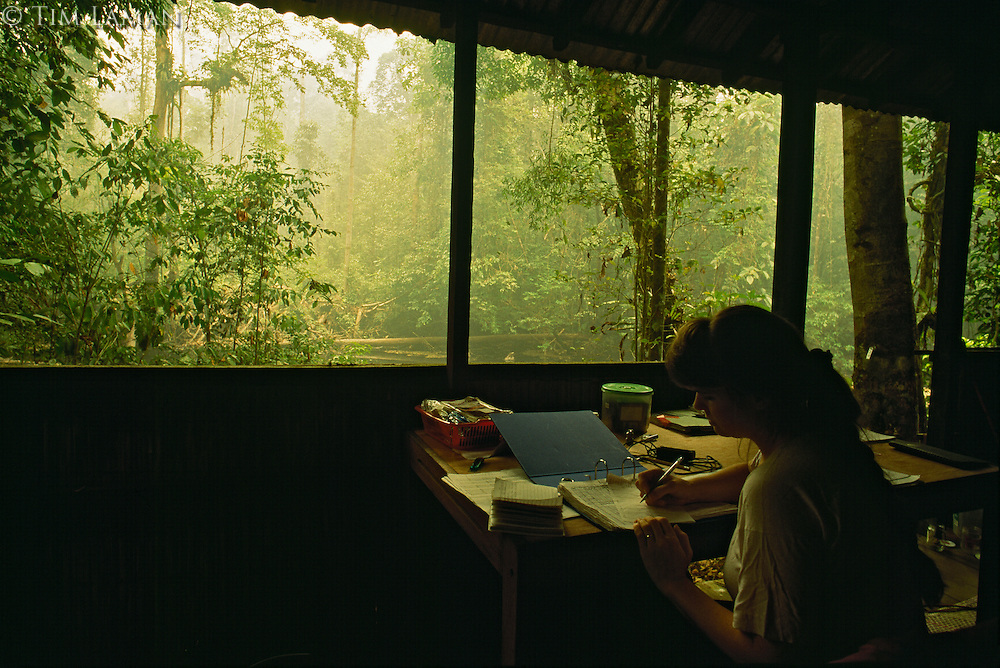 Anthropologist Cheryl Knott reviews her field notes at her open stilt house in Gunung Palung National Park.