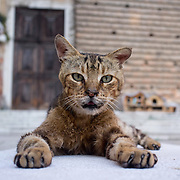 VENICE, ITALY - AUGUST 27:  A stray cat poses in front of Dingo cat shelters in Campo San Lorenzo  on August 27, 2011 in Venice, Italy. Dingo is the Anglo-Venetian association part of the AISPA,  founded in 1965 by Helen Saunders and Elena Scapabolla and is devoted to the welfare of venetian stray cats. Cats in Venice