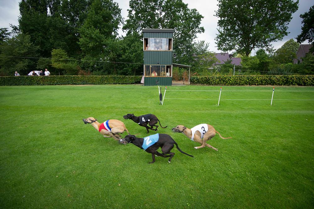 Foto: Gerrit de Heus. Venlo. 25-06-2017. Nederlands Kampioenschap (NK) Windhondrennen.