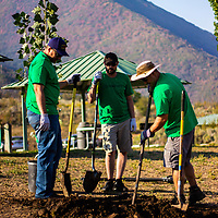 One Tree Planted partnered with UNIFI for this special Plant A Tree Day 2018 volunteer event in Deer Creek State Park, Utah.