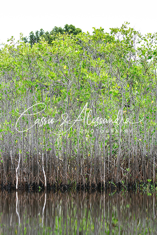 Nice mangrove root patterns combine with still water reflections on the edges of the streams close to the shore.