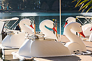 The famous swan boats on Lake Eola Park in Orlando, Florida. Lake Eola Park is located in the heart of Downtown Orlando and home to the Walt Disney Amphitheater.
