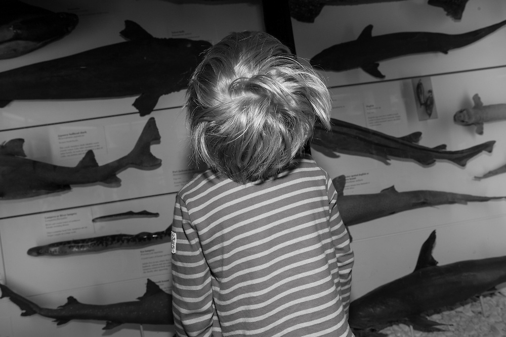 Ben looks at a display with stuffed sharks at the Natural History Museum in Tring, England Tuesday, May 26, 2015 (Elizabeth Dalziel) #thesecretlifeofmothers #bringinguptheboys #dailylife