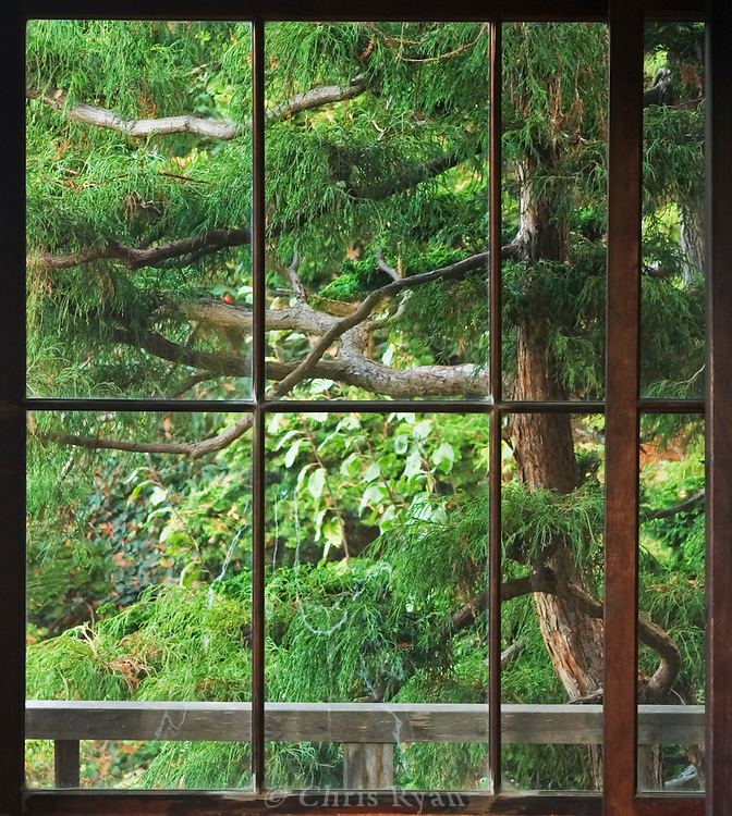 Window onto a Japanese garden