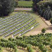 The view of the vineyards in the Marlborough Wine Region from the tower at Highfield Estate WInery,  Brookby Road, Blenheim, Marlborough. New Zealand..Established in 1989, Highfield is a boutique Marlborough winery  owned by Shin Yokoi and Tom Tenuwera. Highfield is surrounded by a beautiful five acre pinot noir block, situated on the Brookby Ridge and signposted by the iconic tower...The Marlborough wine region is New Zealand's largest wine producer. The Marlborough wine region has earned a global reputation for viticultural excellence since the 1970s. It has an enviable international reputation for producing the best Sauvignon Blanc in the world. It also makes very good Chardonnay and Riesling and is fast developing a reputation for high quality Pinot Noir. Of the region's ten thousand hectares of grapes (almost half the national crop) one third are planted in Sauvignon Blanc. Marlborough, New Zealand, 12th February 2011. Photo Tim Clayton