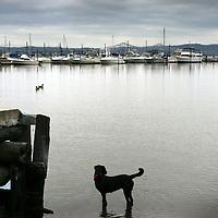 Verenigde Staten.Rockland.Piermont.9 augustus 2005.<br /> Bewoners van het Havenplaatsje Piermont aan de Hudson rivier zo'n 40 km buiten New York.<br /> Vele bewoners van Piermont en van New York hebben een boot in de haven liggen.Piermont is het 1e dorpje aan de Hudson ten Westen van New York City.Haven.Hond.Vogels.Bewolking.Jacht.Boten.Water.<br /> Archives 2005, in the marina of Piermont, New York USA.