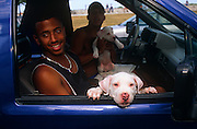Two friends of Hispanic-descent have stopped on Ocean Drive in Miami Beach, Florida to talk with associates while sitting in their SUV 4x4 pick-up-style truck. Each have hold of two Dogo Argentino mastiff puppies, one of which is hanging his chin over through the open window of the vehicle, its long claws also very clearly seen and its freckly nose pointing towards the viewer. The other young animal is being propped up by the car's driver, its belly visible to anyone leaning inside the car. Both dogs are albino-coloured with floppy ears and pink eyes while the two healthy men are dark-skinned and in good-humour, one wearing a singlet vest and prominent silver necklace and the other topless so warm is this summer day.