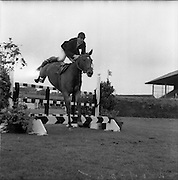 06/08/1960<br /> 08/06/1960<br /> 06 August 1960<br /> R.D.S Horse Show Dublin (Saturday). &quot;Dundrum&quot;, owned by Mr James Wade, Camas, Cashel, Co. Tipperary and ridden by Mr. Thomas Wade (brother of James) won the Wylie Perpetual Challenge Trophy, the 'Civillian' Championship of the Show, at the Dublin Horse Show. Picture shows&quot;Dundrum&quot; ridden by Thomas Wade, clearing one of the jumps in the second round. He was the only competitor to complete the course without fault.