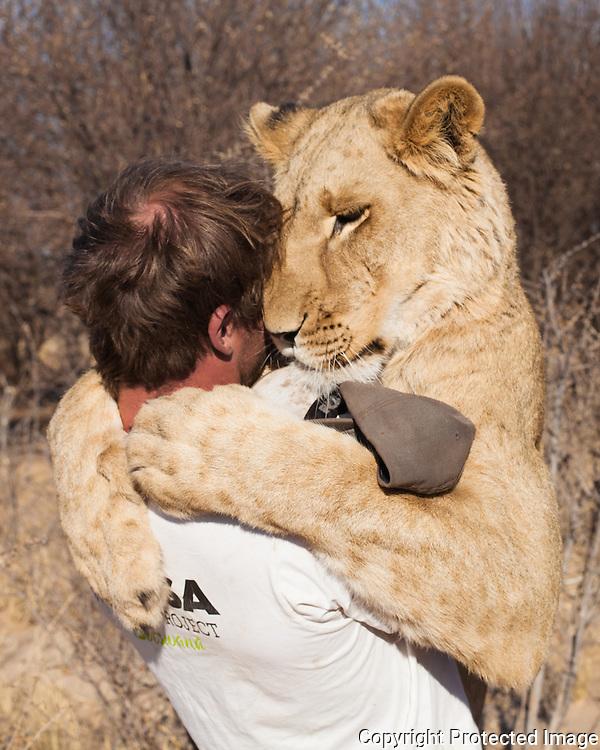 Valentin Gruener, Sirga, lioness, hand raised, kalahari, Botswana, Private Game Reserve, hug, hugging