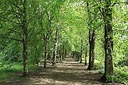 Woodland footpath in Hampstead Heath, London, taken in late May.