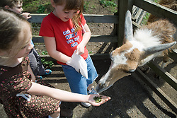 Children feeding a lama on a visit to a city farm,