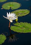 20120807 Water Garden