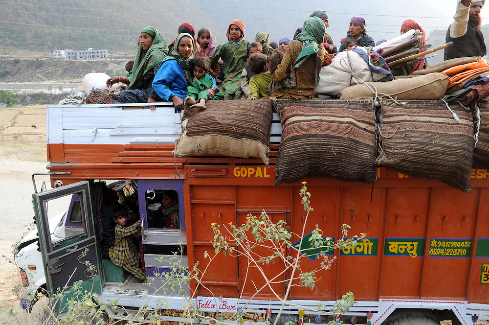 For one long stretch of road, a family hire a truck to carry children and young buffaloes.