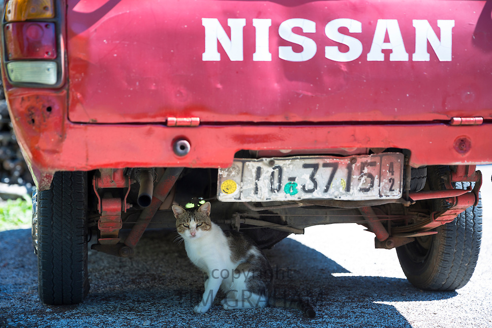 Cat, Felis catus, sheltering from the hot sun under a Nissan pickup truck in Corfu, Greece