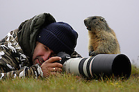 Photographer with marmot (Marmota marmota) (model release 03/08/HTNP), Hohe Tauern National Park, Carinthia, Austria