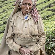 Kolukkumalai Tea Plantation, India