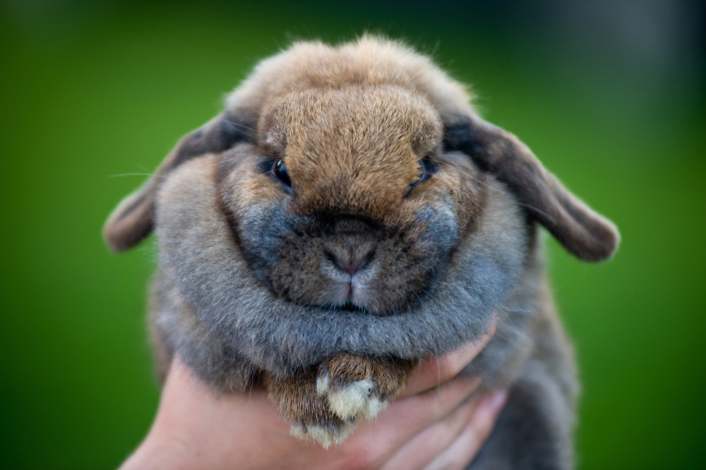 Person holding a rabbit