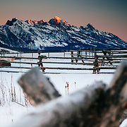 The Tetons at sunrise through ranch fenceline during winter.