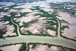 Aerial view of mangroves fringing a coastal river in the east Kimberley.