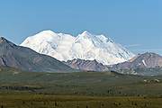 The twin peaks of Denali, the highest mountain in North America in a rare clear day in Denali National Park Alaska. Denali, once called Mount McKinley, is the highest mountain peak in North America, with a summit elevation of 20,310 feet (6,190 m) above sea level. Denali National Park and Preserve encompasses 6 million acres of Alaska's interior wilderness.