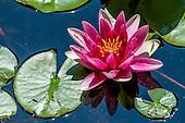 mallard_pond_gardens_6-2016