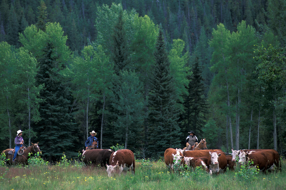 1/2 Way Ranch, near Kleena Kleene,.Chilcotin Country,.British Columbia, Canada