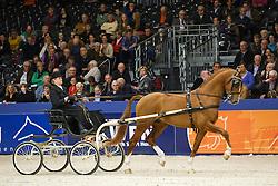 Schilder Bea<br /> KWPN Stallion Selection - 's Hertogenbosch 2014<br /> © Dirk Caremans