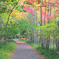 Autumn colors in the woodlands of Sieur de Monts area of Acadia National Park. Bar Harbor, Maine.