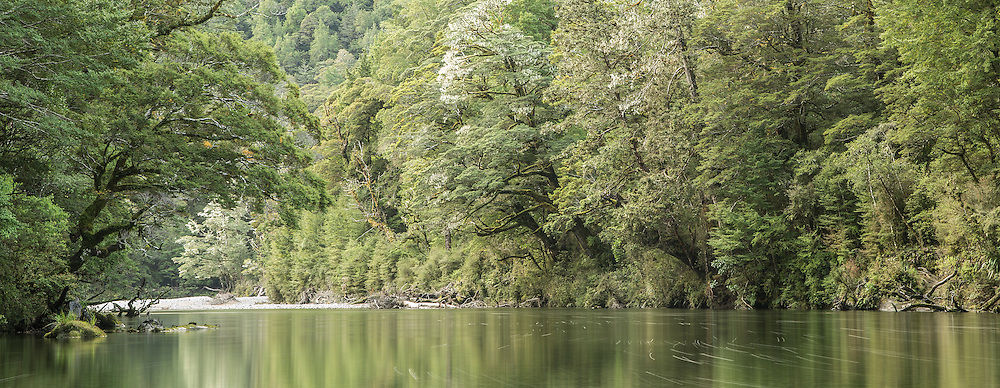 Beech trees along the banks of the Clinton River, Fiordland National Park