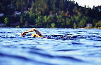 Man swimming in Lake Washington for a open water swim training session.  Seattle, Washington, USA.