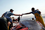 Shawn Johnson, left, of the Marine Mammal Center, gets a sharp knife from Erisa Apantaku during a necropsy on a 42-foot fin whale calf that beached itself then died in Stinson Beach, Calif., Monday, August 19, 2013.