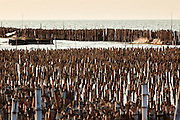01 MAY 2010 - SAMUT SAKHON, THAILAND: Waves from the Gulf of Siam break on the bamboo sea wall in Samut Sakhon. The wall doesn't actually hold the sea back, but it blunts the force of waves slamming into the shore and slow the rising sea level in the area. The bamboo sea wall is being used in connection with mangrove replanting to claim land lost to rising seal levels.  PHOTO BY JACK KURTZ