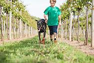 A boy and his natural eared Doberman walking thru a vineyard