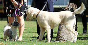 Westminster Dog of the Year 2016 <br /> in Victoria Tower Gardens, London, Great Britain <br /> 8th September 2016 <br /> organised by The Kennel Club and Dogs Trust together with dog loving MPs and Peers. <br /> <br /> Winners:<br /> <br /> Jonathan Reynolds MP with his dogs Clinton talks to Anna Turley MP's dog Clem <br /> <br /> <br /> <br /> <br /> <br /> <br /> Photograph by Elliott Franks <br /> Image licensed to Elliott Franks Photography Services