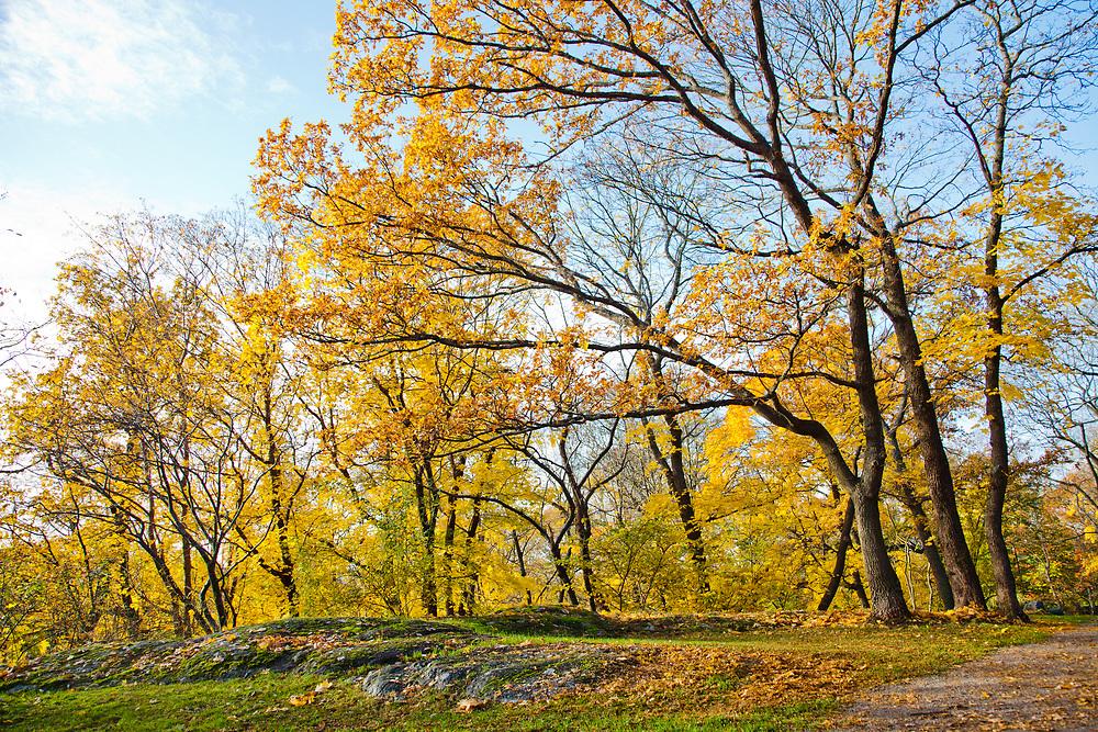Trees going yellow-orange during autumn, Långholmen, Stockholm.