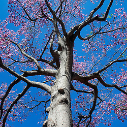 ÁRVORES / Trees