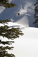 Powder skier silohetted in his wake, sinks into waste-deep snow at  Alta, Utah, with evergreens