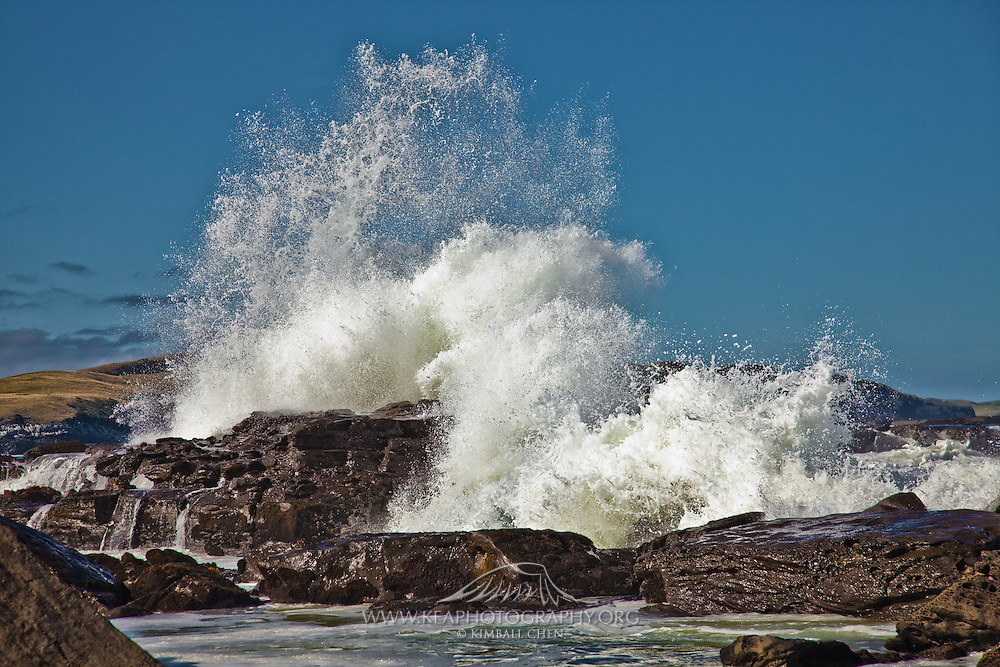 Curio Bay, crashing wave 2
