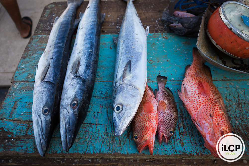 The Conchshell Bay Fishmarket in central Belize City. Fishermen drive their boats up the channel from the Belize River to the pavilion over the channel and sell their fish directly from their boats to the local market. An entire economy surrounds this daily event including not only the fishermen, but also people who come to clean fish or sell vegetables or beer and the local stores that benefit from the increased traffic. From an assignment for Rare and Orvis with support from Environmental Defense Fund, the Belize Fisheries Department, and Wildlife Conservation Society to document the Fish Forever program in Belize.