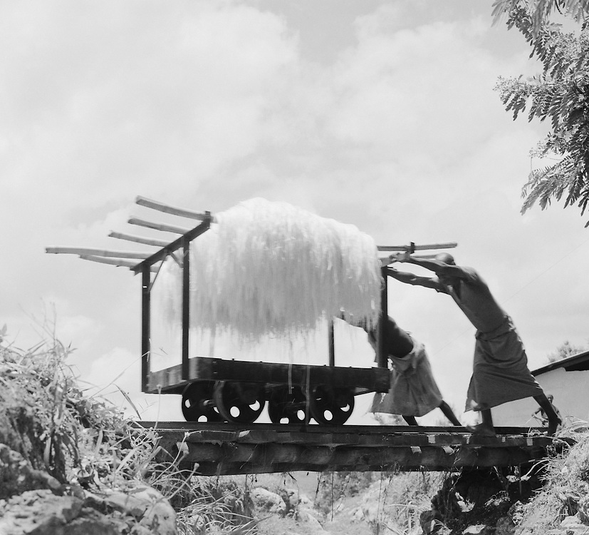 Pushing Sisal on Cart, Tanga, Tanganyika (now Tanzania), Africa, 1937