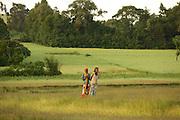 Women walking in a field rural Ethiopia.